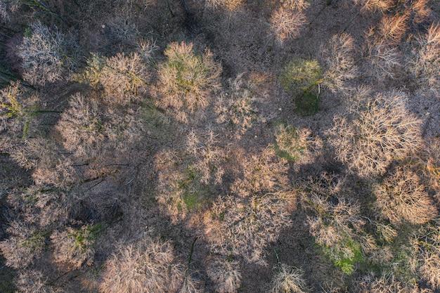Blick von oben auf den laubbaumwald zu beginn des frühlings