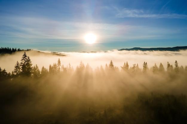 Blick von oben auf dunkle, stimmungsvolle kiefern im nebeligen fichtenwald mit hellen sonnenaufgangsstrahlen, die durch äste in den herbstbergen scheinen.