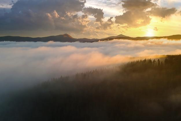 Blick von oben auf dunkle, stimmungsvolle kiefern im nebeligen fichtenwald mit hellen sonnenaufgangsstrahlen