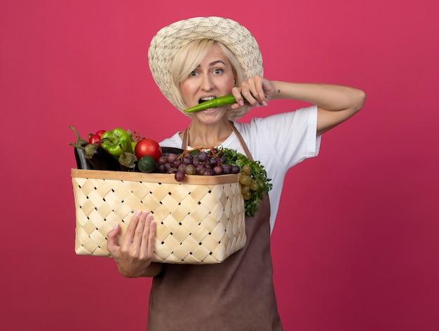 Blonde gärtnerin mittleren alters in uniform mit hut, die einen korb mit gemüse beißt, der pfeffer mit blick auf die vorderseite isoliert auf der purpurroten wand hält