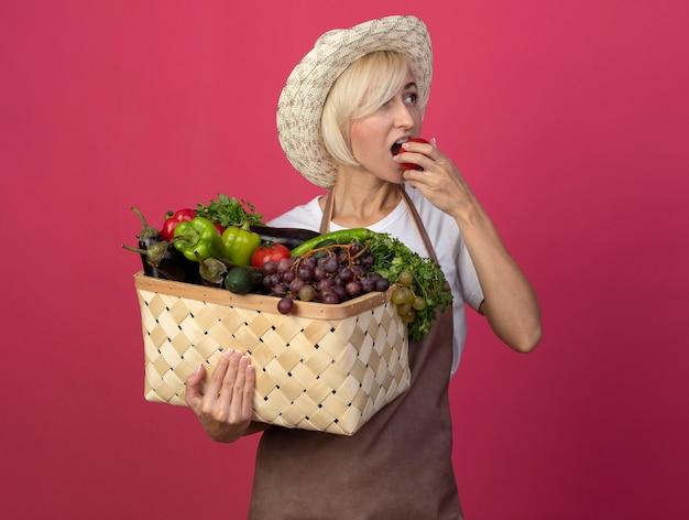 Blonde gärtnerin mittleren alters in uniform mit hut, die einen korb mit gemüse hält und auf die seitlich beißende tomate schaut, die auf der purpurroten wand isoliert ist