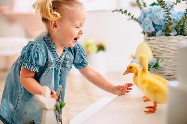 Blondel kleines mädchen im blauen kleid und zwei ponytales, die mit gelben flaumigen entlein und dem lachen spielen. ostern, frühling.