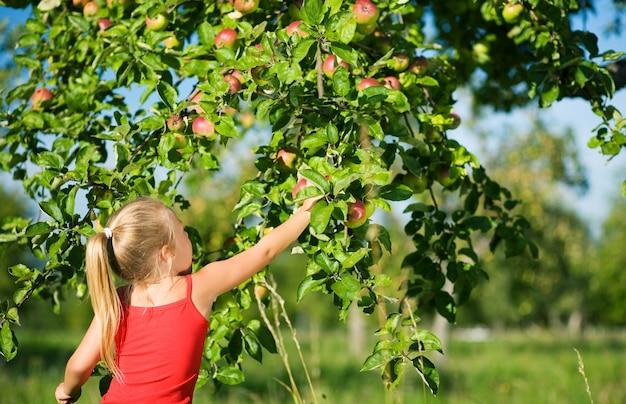 Blondes mädchen, das äpfel auswählt