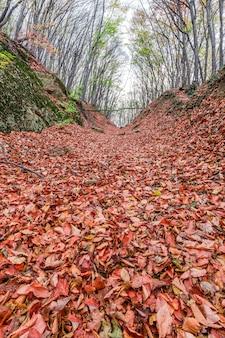 Bloße bäume des waldherbstes mit den gefallenen zerstreuten verwelkten blättern orange aus den grund.