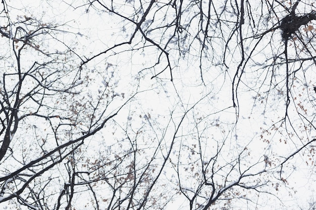 Bloßer baumast des niedrigen winkelsichtschattenbildes am wintertag