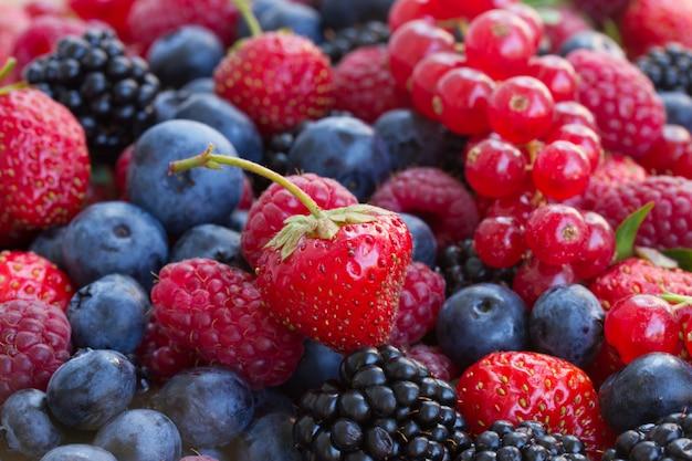 Bluberry, himbeere, brombeere und rote johannisbeere