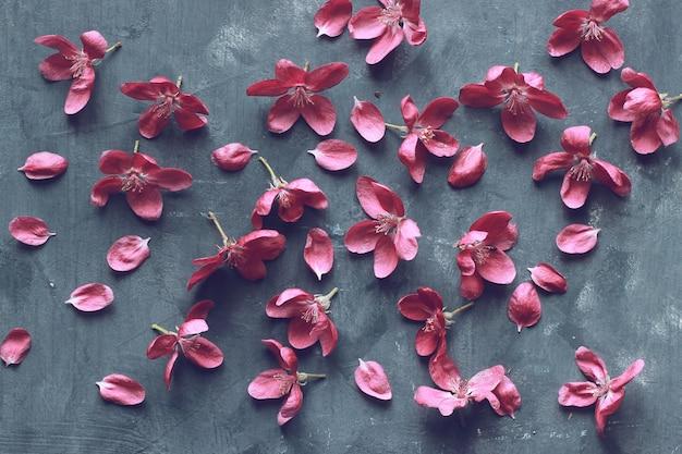 Blühende apfelbaumblumen des frühlingsrosa auf dunklem hintergrund