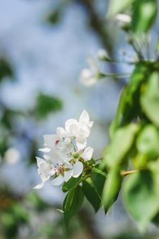 Blühende bäume, apfelbaum, baumblumen, frühling, bestäubung, natur