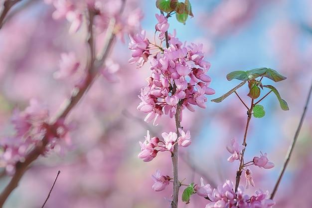 Blühende bäume in mit duft gefüllten frühlingsparks