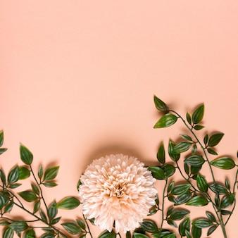 Blühende blume der draufsicht mit laub