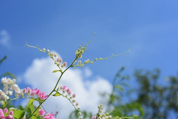Blühende blume und grünes blatt mit hellem himmel