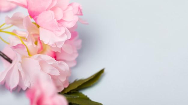 Blühende blumen der draufsicht mit kopieraum