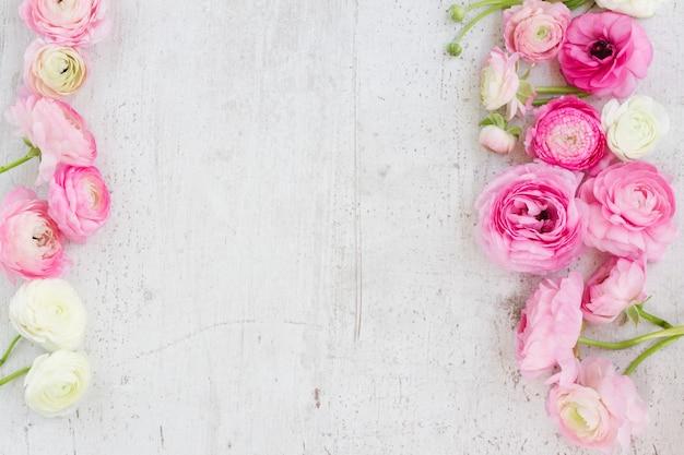 Blühende blumen des rosa und weißen ranunkels auf der flachen laienszene des weißen hölzernen hintergrunds