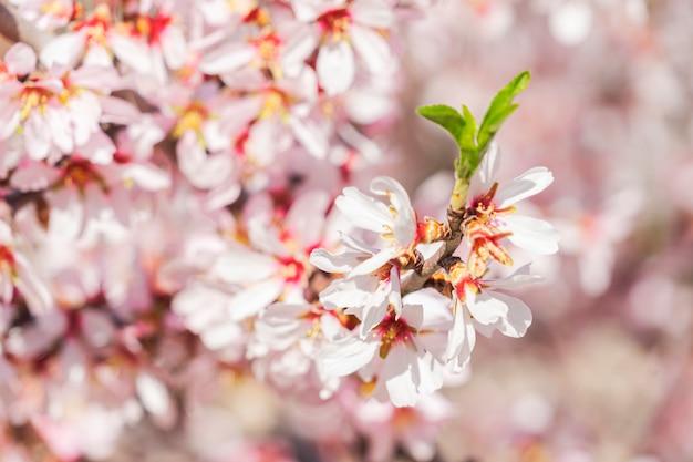 Blühende blumen in einem mandelbaum