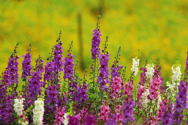Blühende blumen mit natürlichem hellem hintergrund