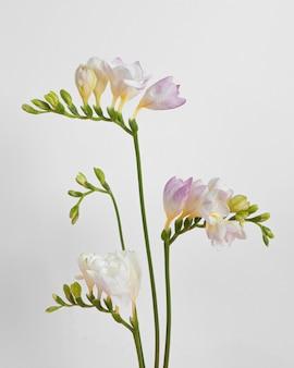 Blühende blumen schließen sich