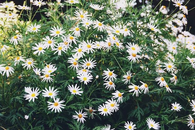 Blühende blumen und baum in der blumenhaube an den gärten durch die bucht, singapur