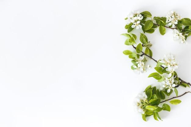 Blühende frühlingsbirnenzweige auf einem weißen hintergrund, blumenrahmen, draufsicht, flache anordnung. frühlingskonzept.