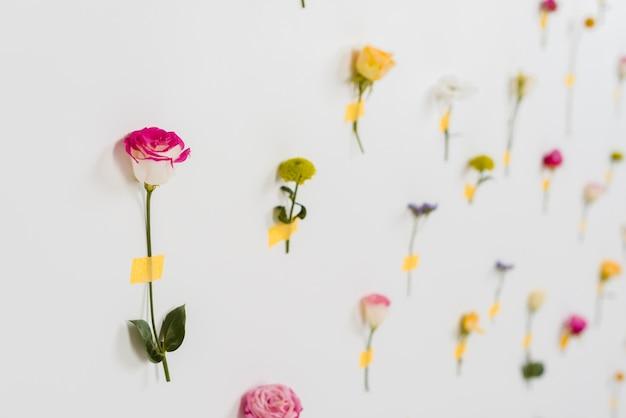 Blühende frühlingsblumen