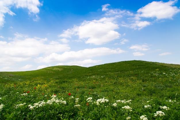 Blühende frühlingshügel mit grünem gras gegen einen strahlend blauen himmel