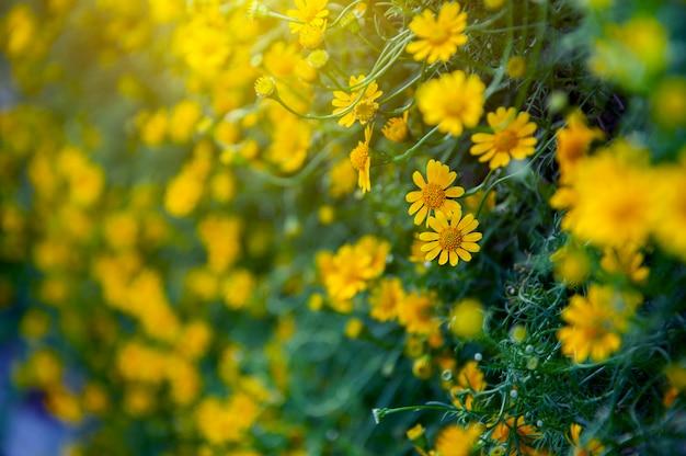Blühende gelbe blume im floragarten.