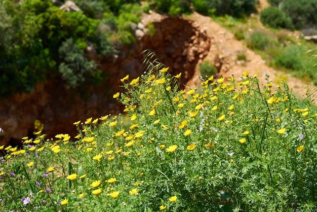 Blühende gelbe pflanzen in der natur