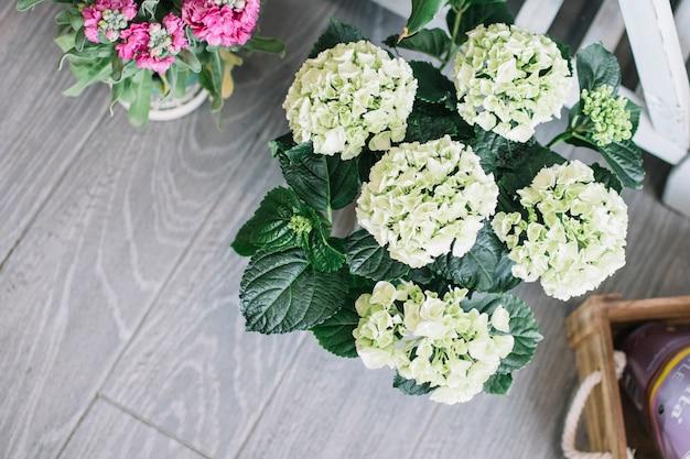Blühende grüne blumen im markt