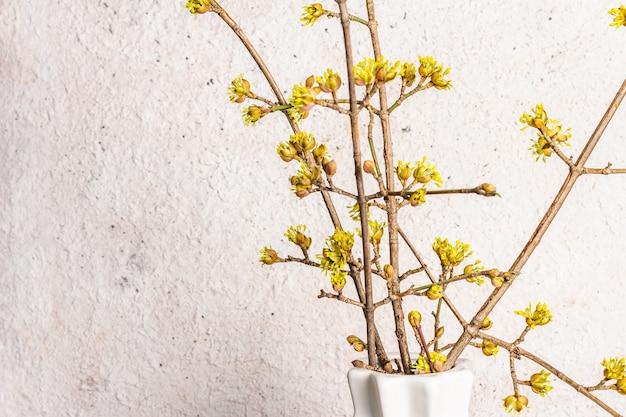 Blühende hartriegelzweige in einer weißen keramikvase auf einem stein.
