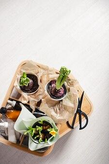 Blühende junge grüne frühlingsknollen-topfhyazinthe und narzissenblumen in einer hölzernen dekorbox in einer modernen artwohnung auf dem boden.