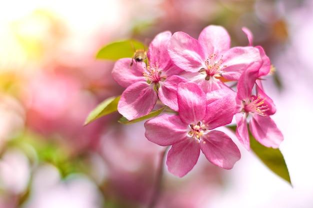 Blühende kirschblüte blüht im lila ton karten-hallo frühlingskonzept weinleseart getont