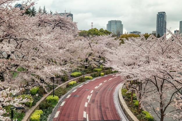 Blühende kirschblüte in einem japanischen park