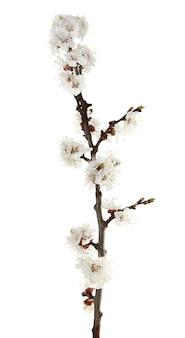 Blühende knospe auf weiß