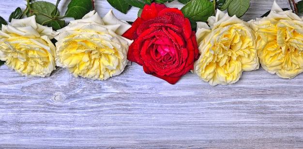 Blühende knospen von rosen