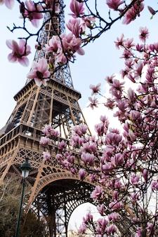Blühende magnolie vor dem hintergrund des eiffelturms