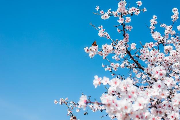 Blühende mandeln auf einem hintergrund des blauen himmels