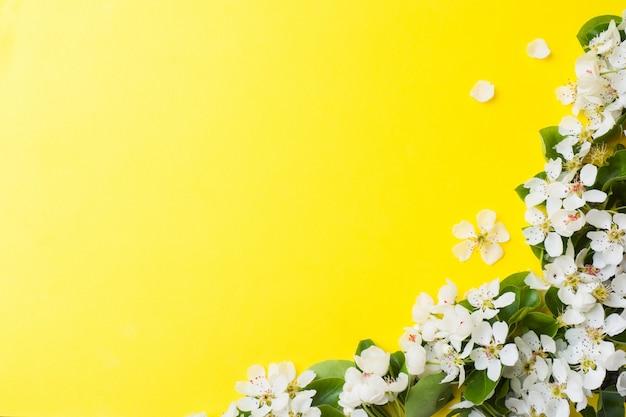 Blühende niederlassung des frühlinges auf gelbem hintergrund