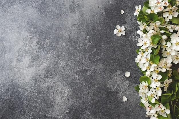 Blühende niederlassung des frühlinges auf grauem konkretem hintergrund