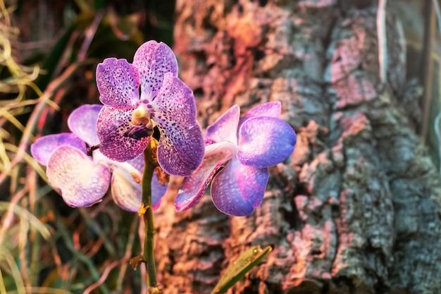 Blühende orchideen im gewächshaus.
