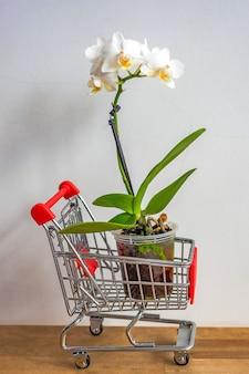 Blühende orchideenpflanze steht im spielzeug-einkaufswagen auf boden