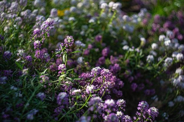 Blühende pflanzen in einem garten