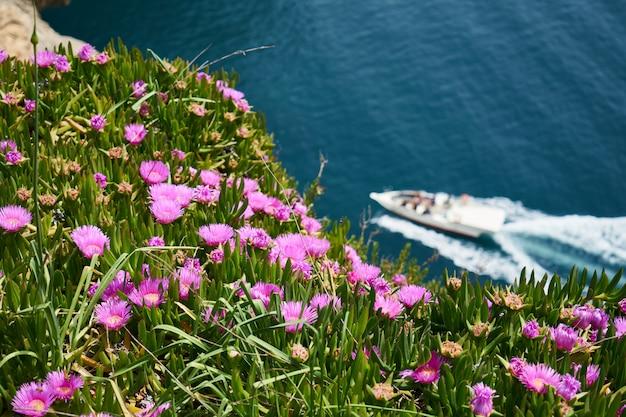Blühende purpurrote anlagen in der natur