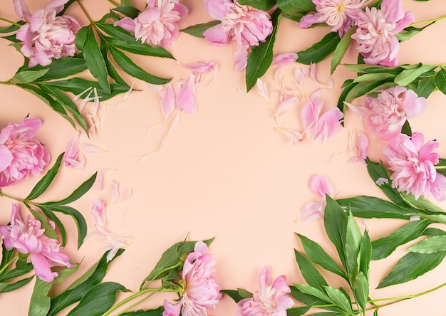 Blühende rosa pfingstrosenknospen auf einem pfirsichhintergrund