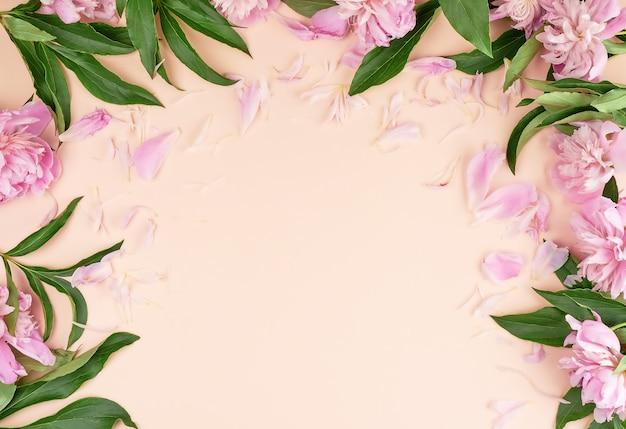 Blühende rosa pfingstrosenknospen auf hellrosa
