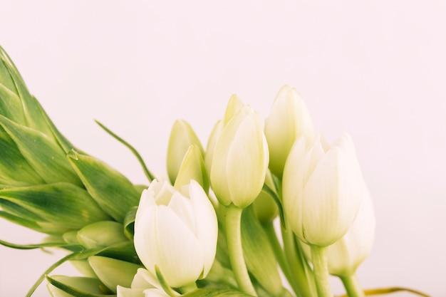 Blühende tulpe blumen