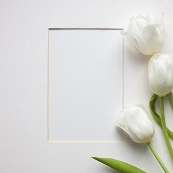 Blühende weiße tulip flowers and a paper card auf weißem hintergrund