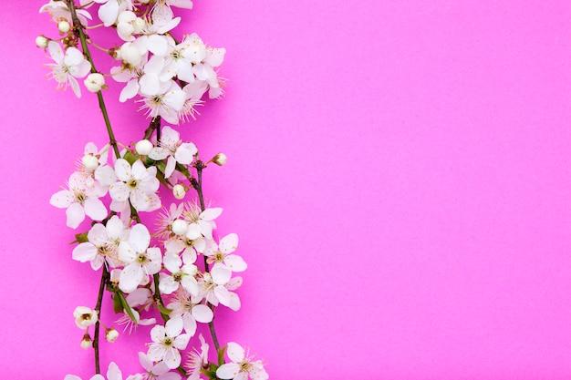 Blühende zweige mit weißen blumen auf einem rosa hintergrund. frühlingsmodell für ihre texte