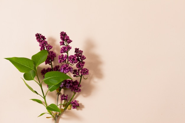 Blühende zweige von flieder auf einem pastellhintergrund mit kopienraum.