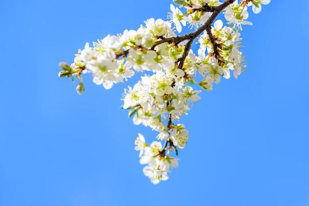 Blühender apfelbaum gegen blauen himmel