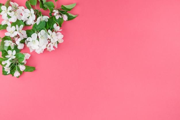 Blühender brunch des weißen frühlingsapfelbaums