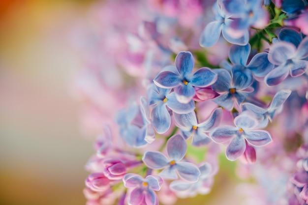 Blühender fliederzweigstrauß auf abstraktem hintergrund